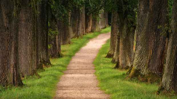 pathway in between trees